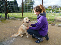 dog training hertfordshire